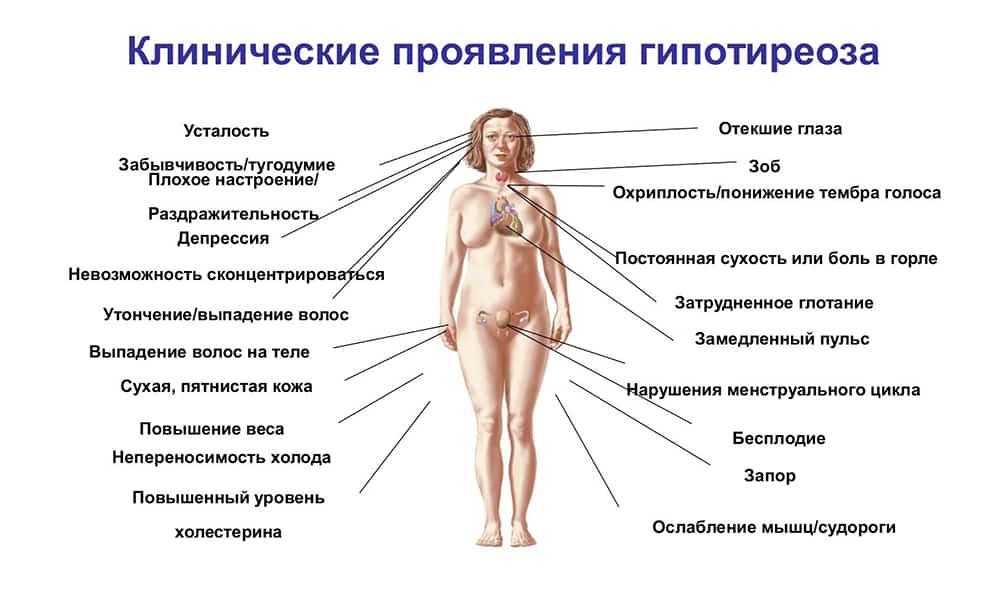 Дефицит железа и гипофункция щитовидной железы. часть 1