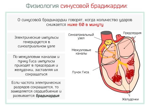 Синусовая брадикардия у ребенка 8 лет