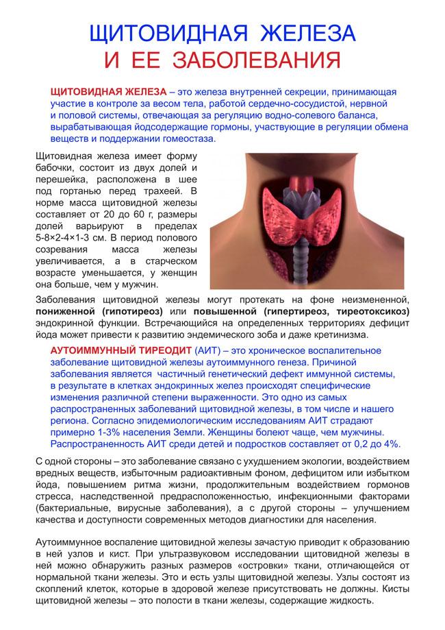 Щитовидная железа и аритмия связь   про щитовидку