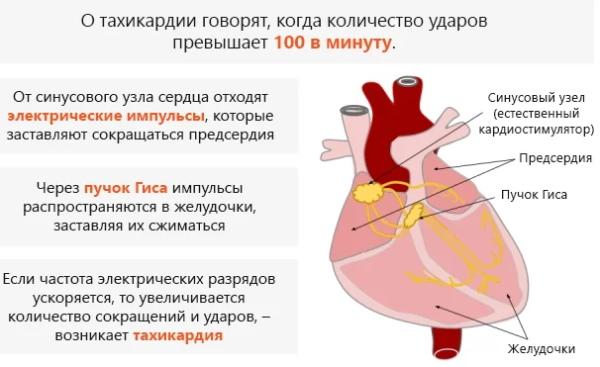 Сердцебиение и тахикардия при климаксе: симптомы и лечение учащенного пульса