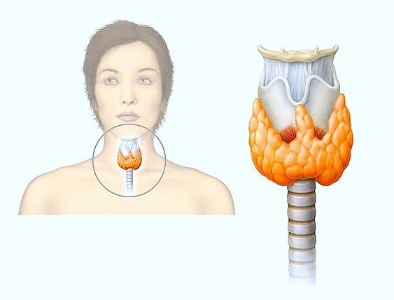 Зависимость поражения щитовидной железы и аритмии