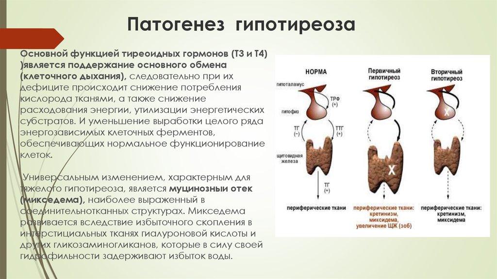 Тахикардия   симптомы   диагностика   лечение - docdoc.ru