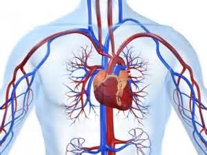 Частота сердечных сокращений: норма у детей по возрастам, у новорожденных