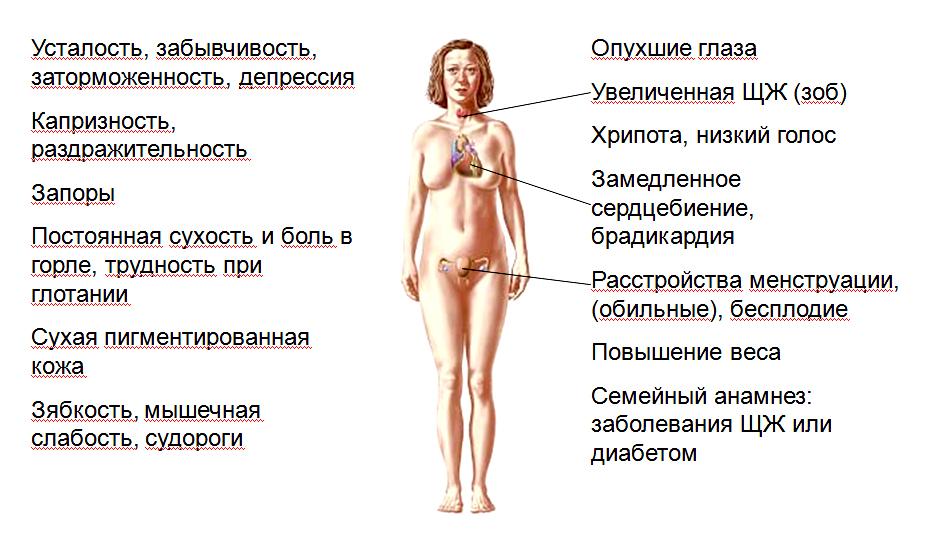 Щитовидная железа и сердце   pro shchitovidku