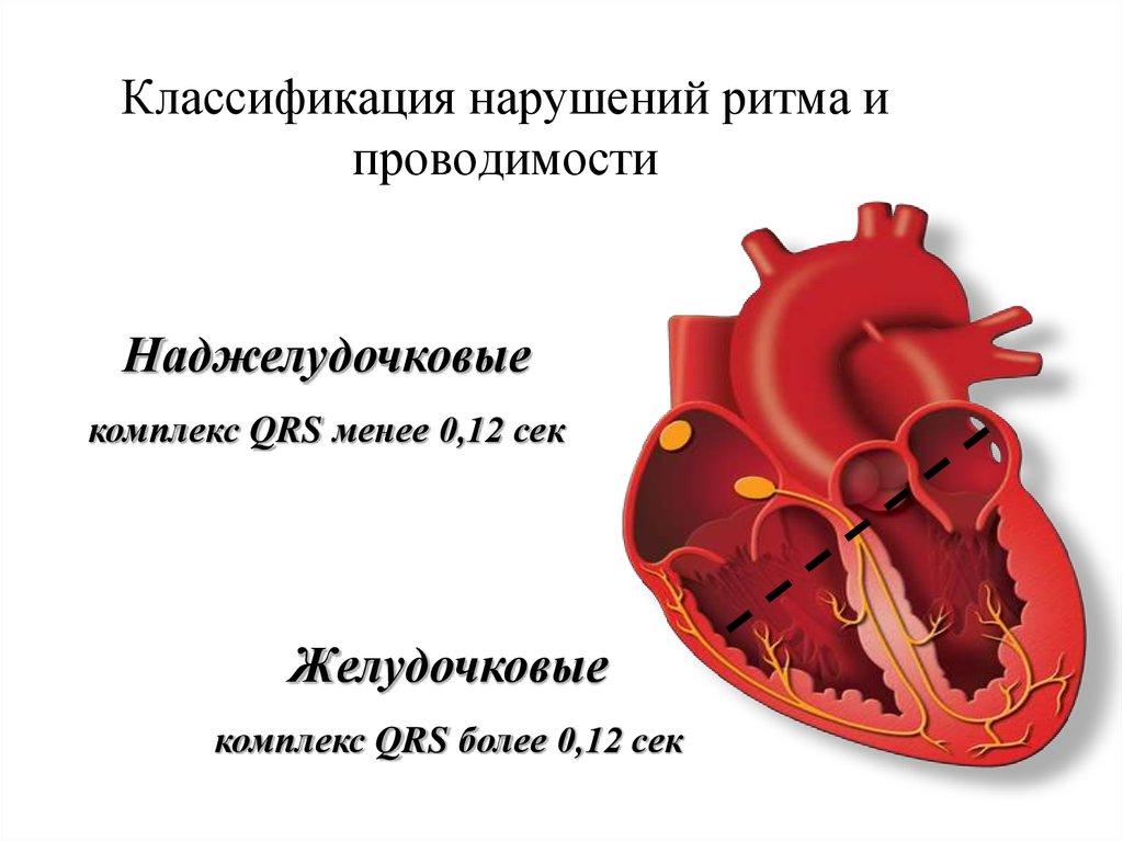 Нарушения сердечного ритма: виды, причины, признаки и выявление, лечение