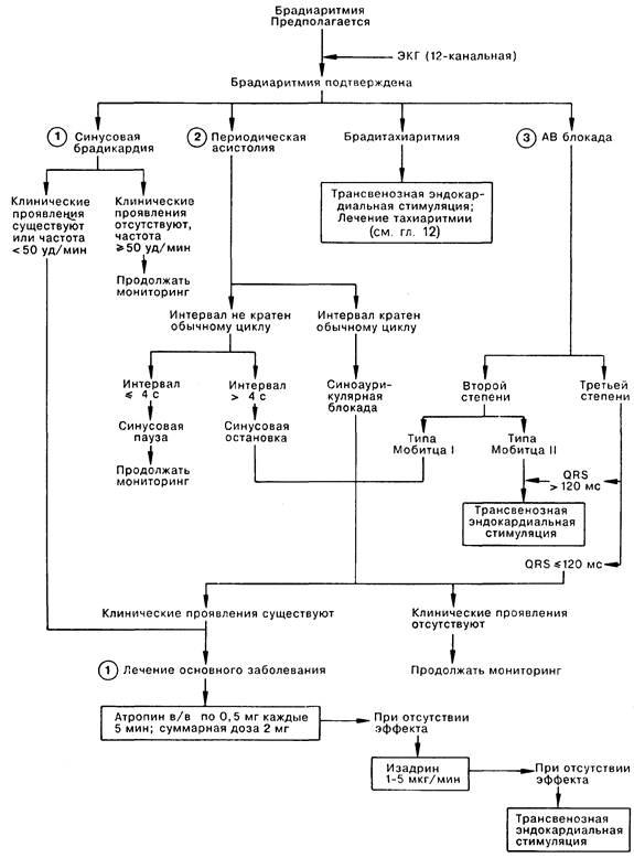 Синусовая брадиаритмия у детей